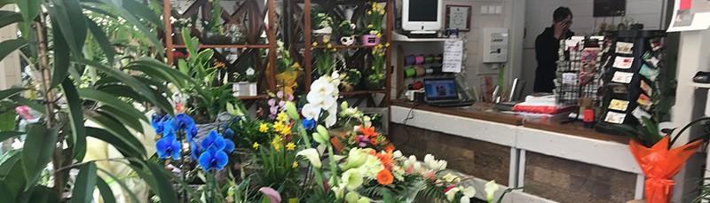 Vente de fleurs et de plantes à Outreau